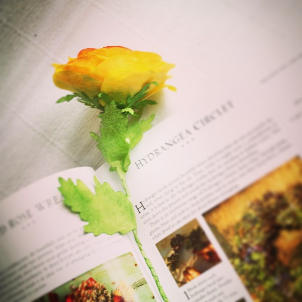 orange ranunculus bookmark