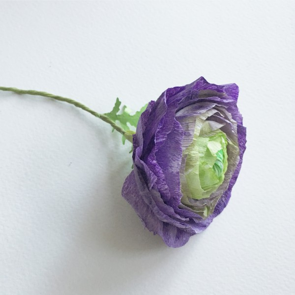 purple ranunculus bookmarks