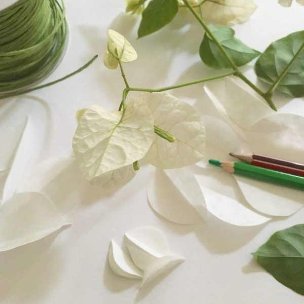 Bougainvillea – a home made flower