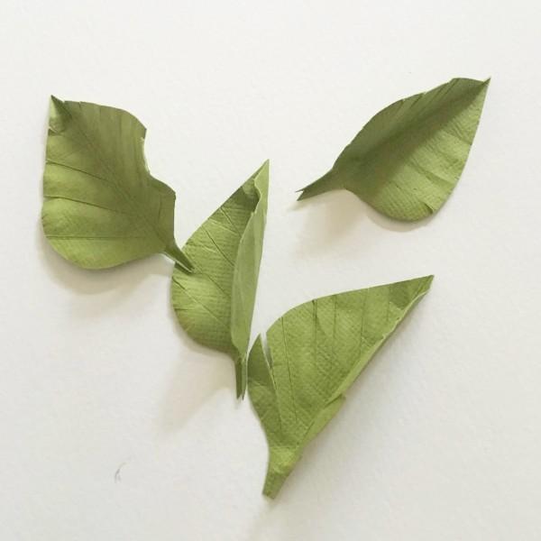 bougainvillea leaves
