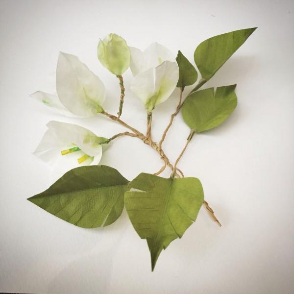 paper bougainvillea