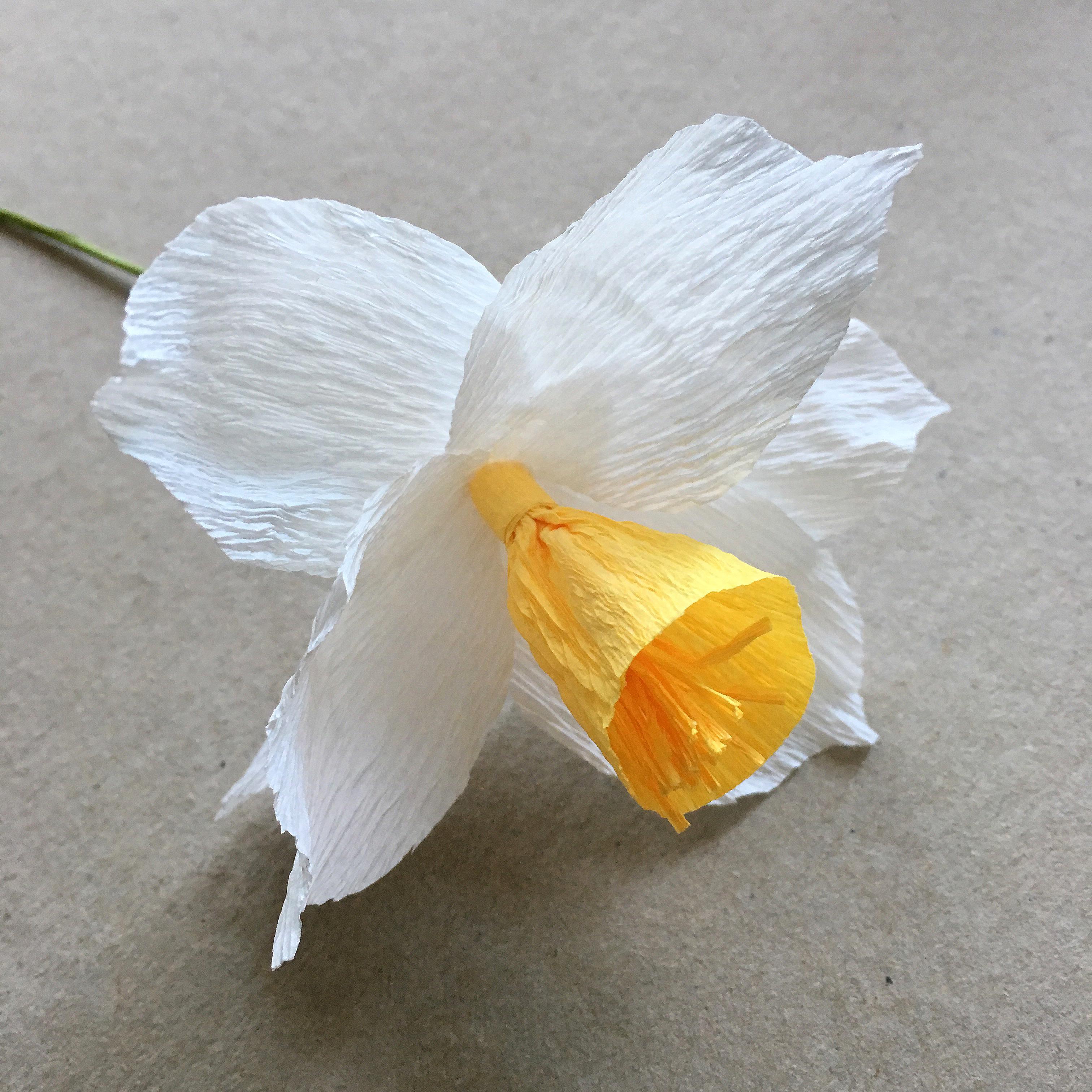 everlasting crepe paper daffodils