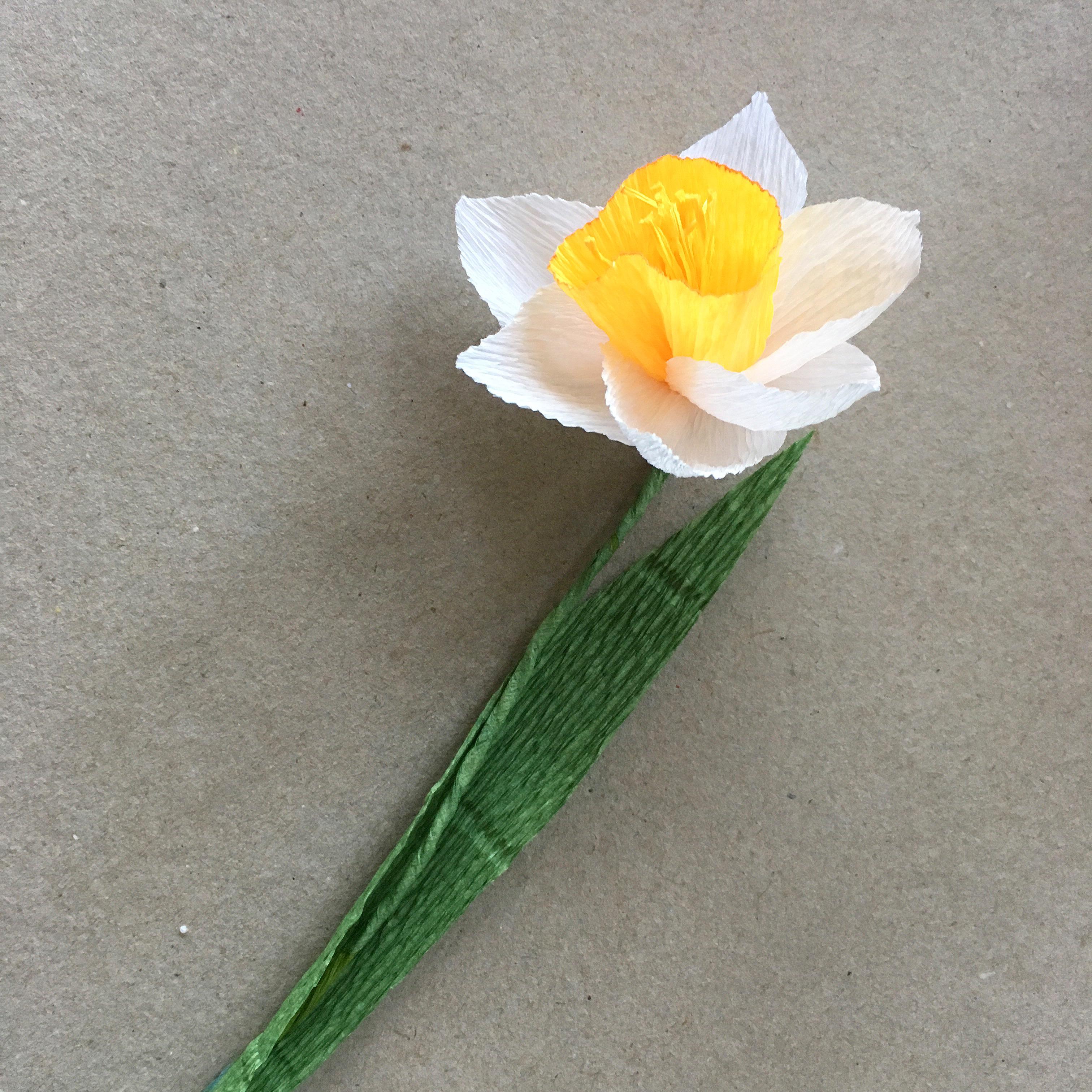 crepe paper everlasting daffodil