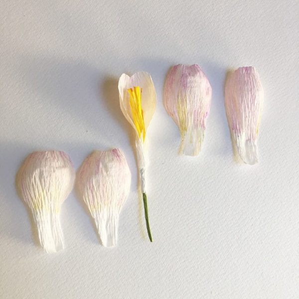 every season crocus