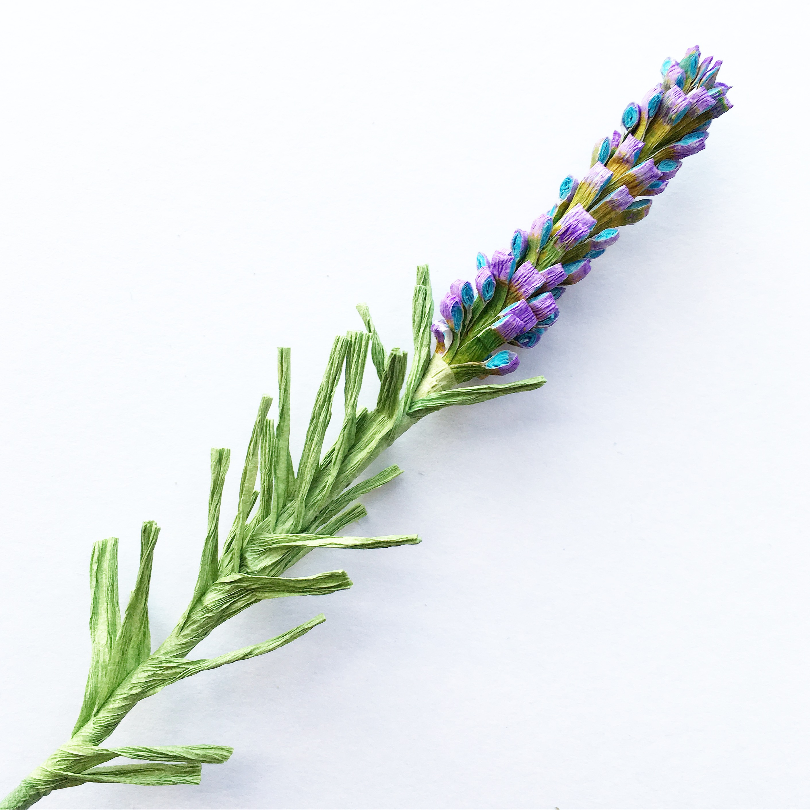 grow paper lavender field