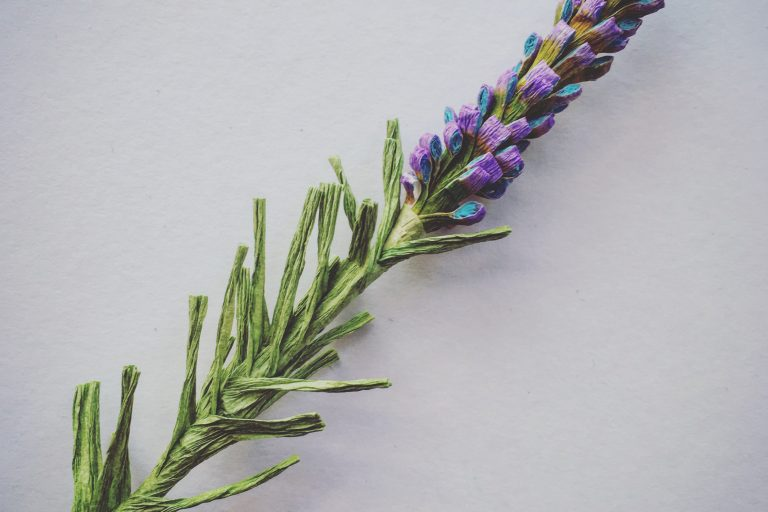Grow your paper lavender field!