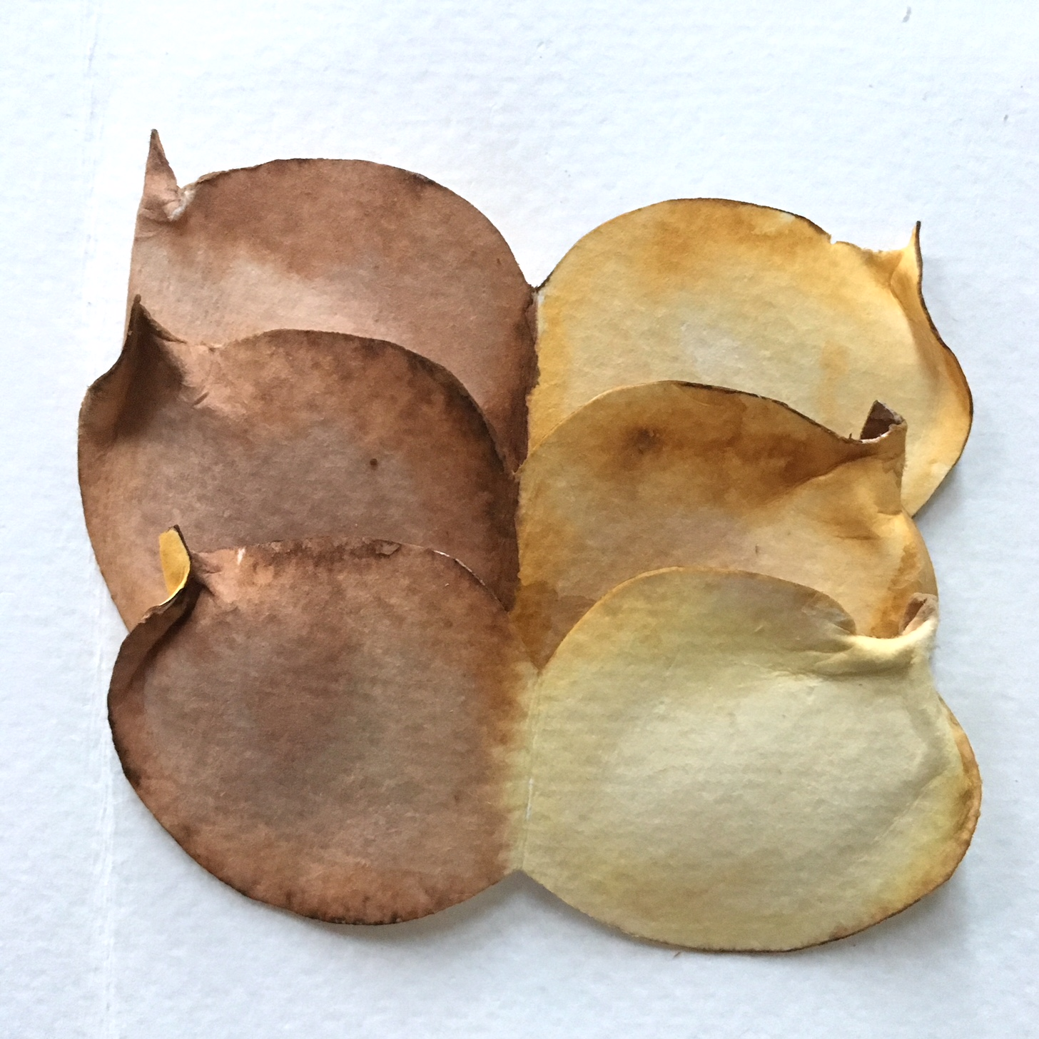 3 pieces of double leaf shapes in light and dark brown