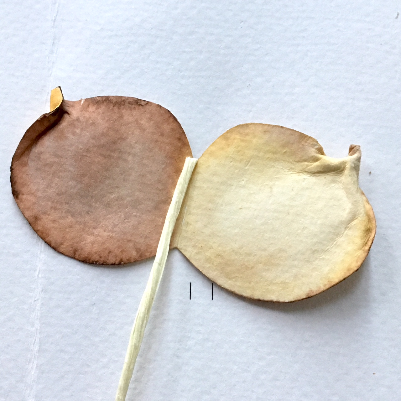 leaf shape and paper wire - ready to glue the wire in the middle of the double leaf shape