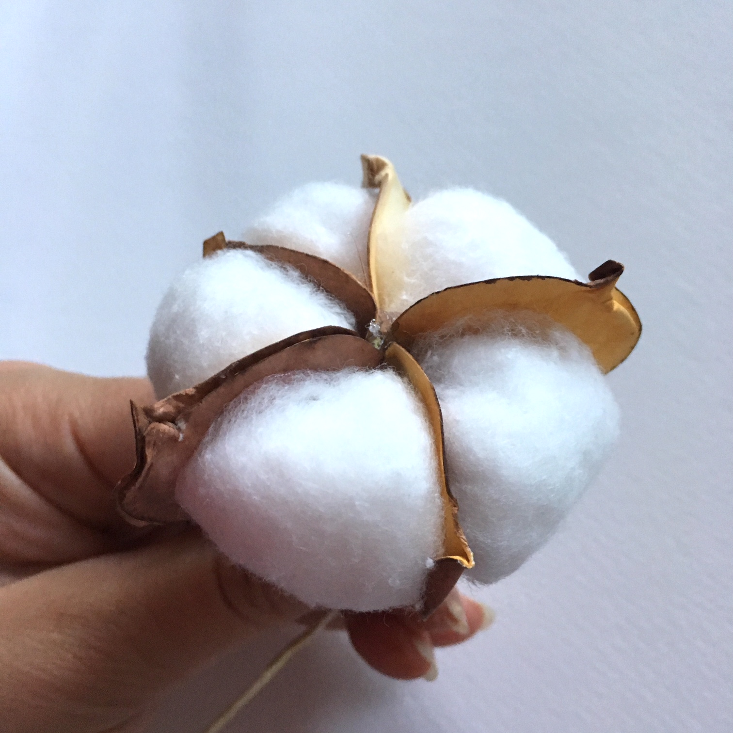 all the cotton balls glued between the leaves