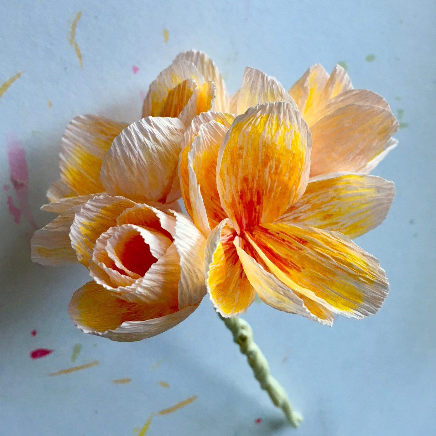 peper pelargonium flower head