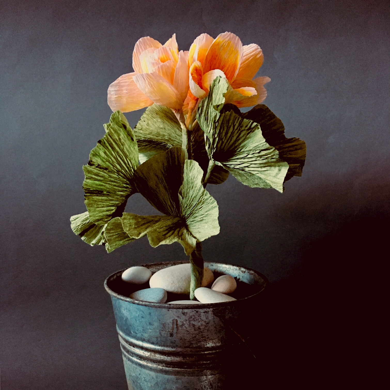 crepe paper orange-yellow Pelargonium