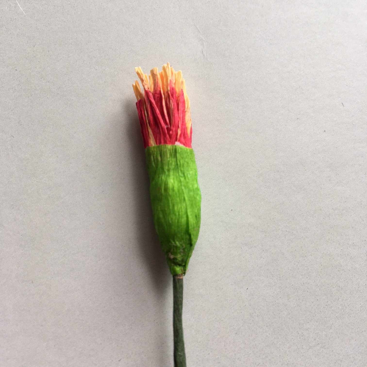 making the stamens of the crepe paper Poinsettia