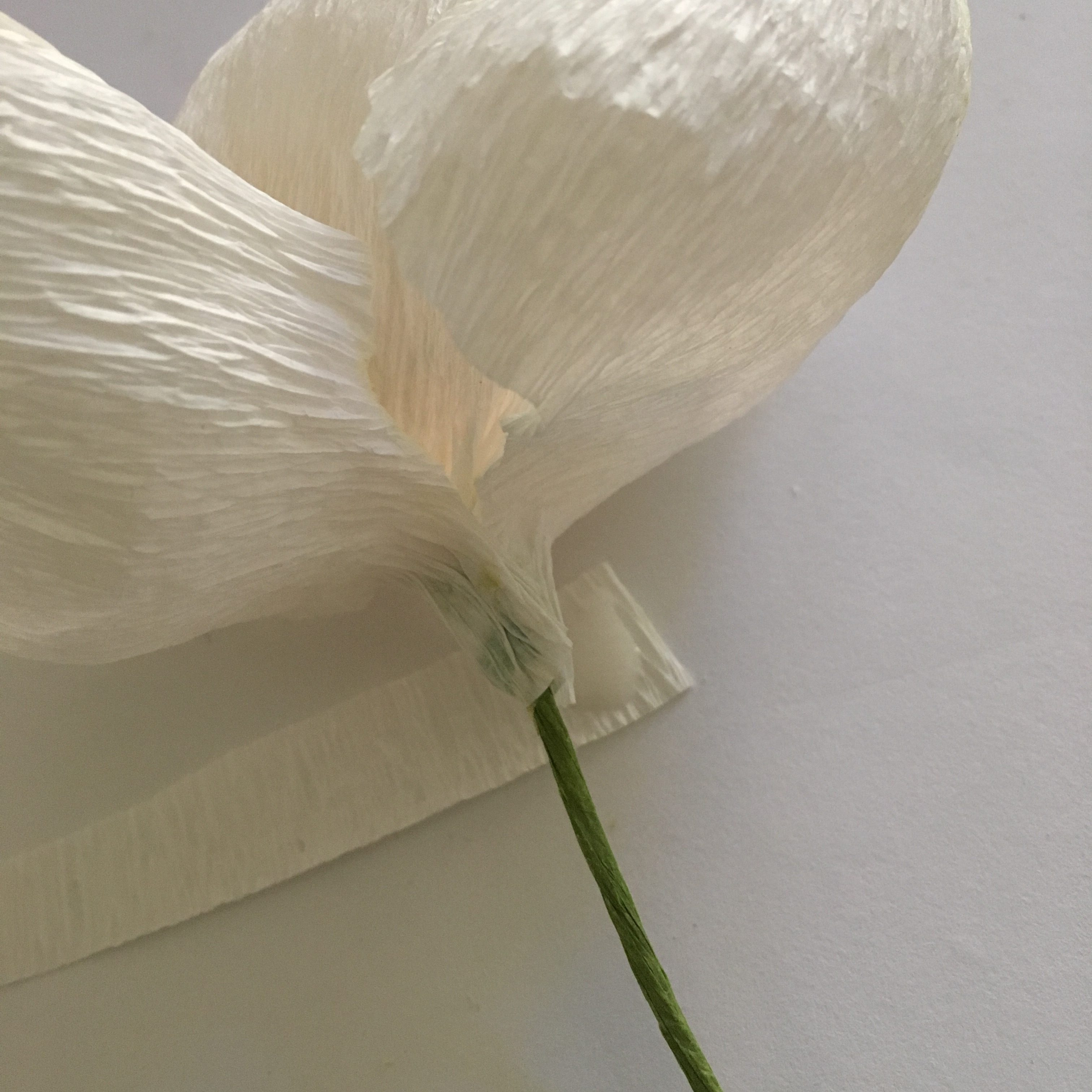 Iceland poppy flower -fixing the stem