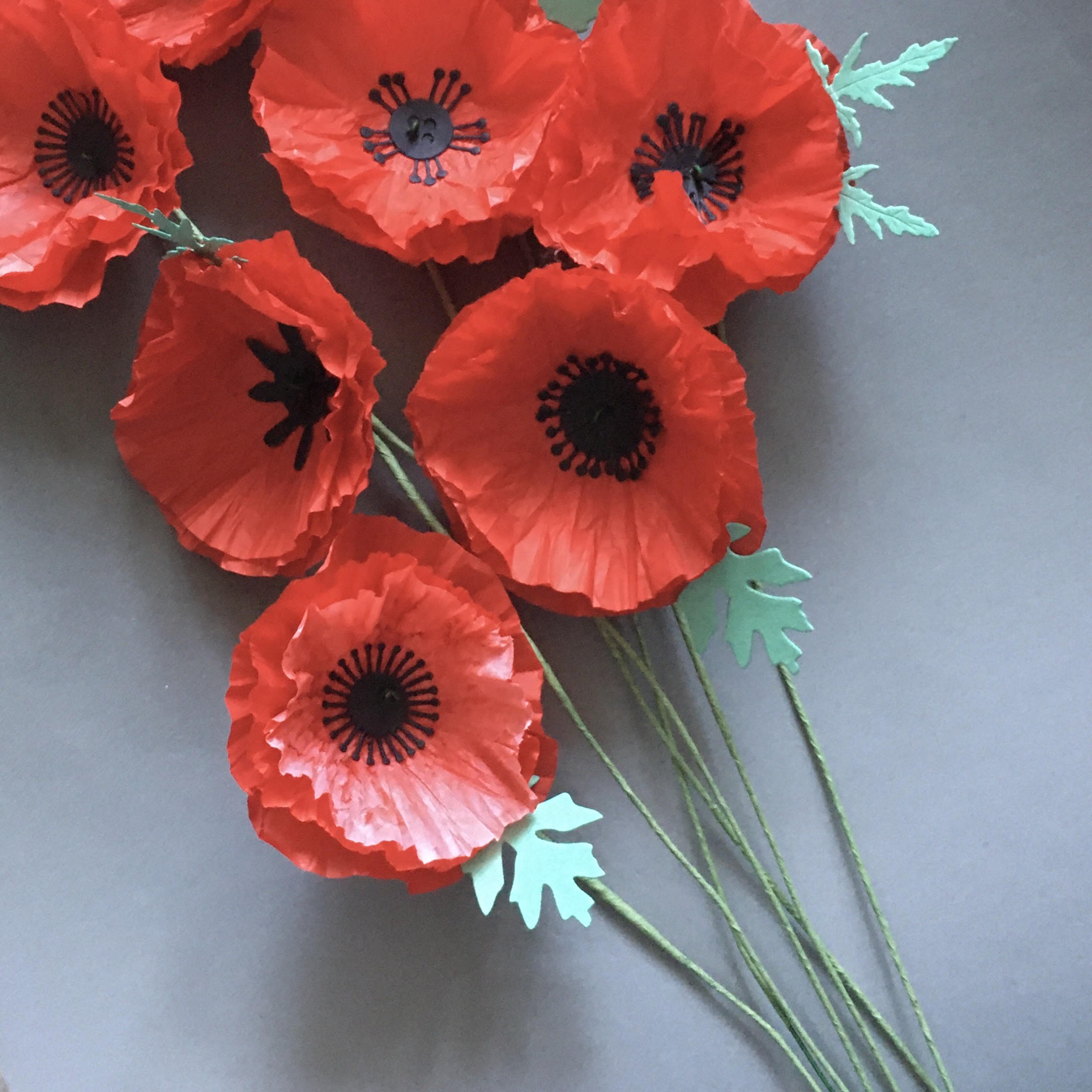 ANZAC tissue paper poppies