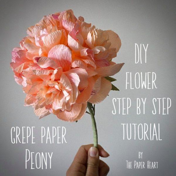 DIY crepe paper Peony flower step by step tutorial