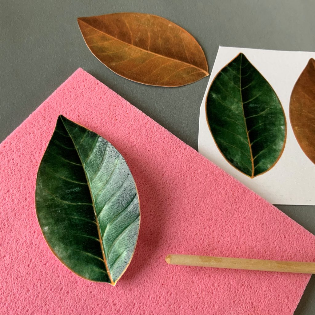 cardboard magnolia leaves