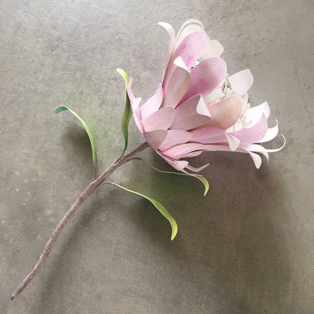 Watercolour paper Protea flower