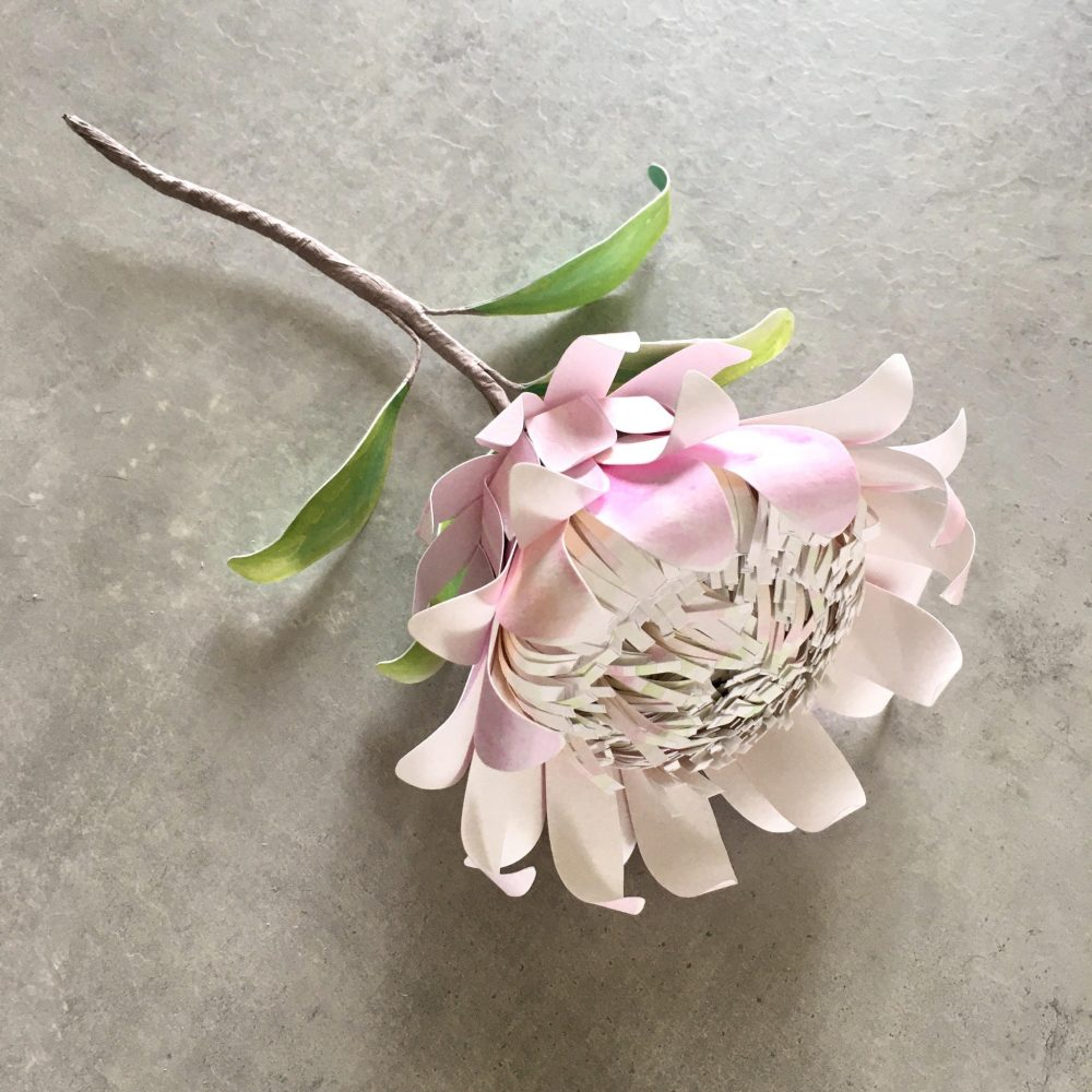 Watercolour Protea flower – project for the whole family