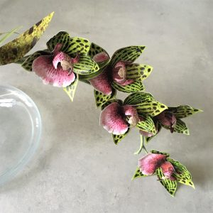 Galeopetalum Starbust orchid printable templates