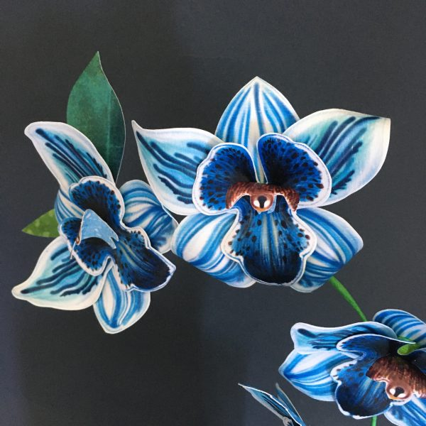 paper blue orchid